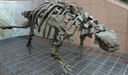 Stufe der Evolution Foto: hinsehen.net